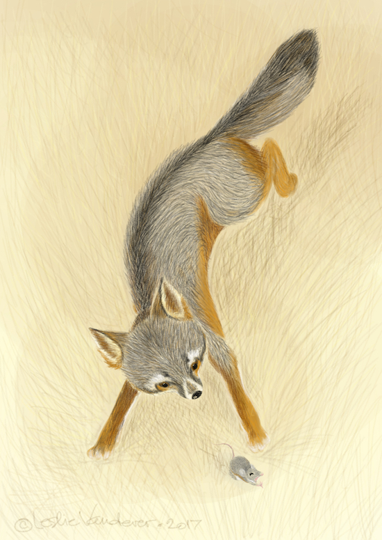 Island Fox, digital art by Leslie Wren Vandever