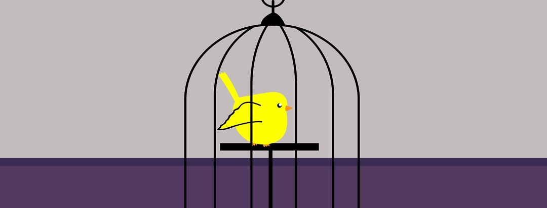 What's Your Canary?